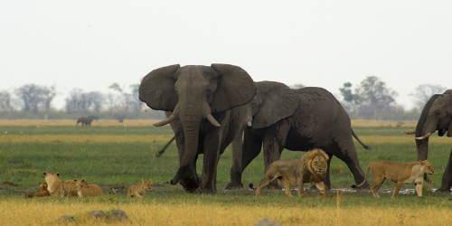セネガルはそんなに魅力的な国なのか!?