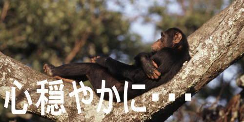チンパンジーすげえ!