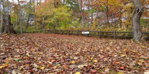五感全開で紅葉を楽しむ