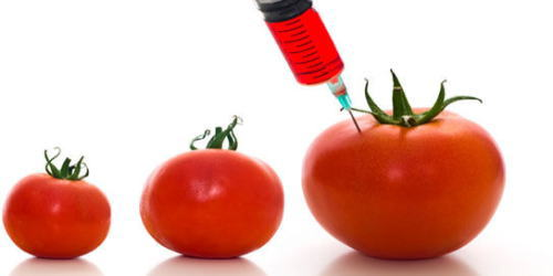 GMO ~ 遺伝子組み換え作物