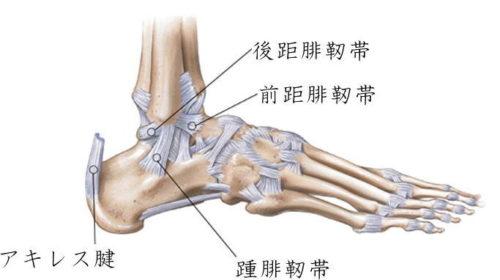 足関節外側の靭帯